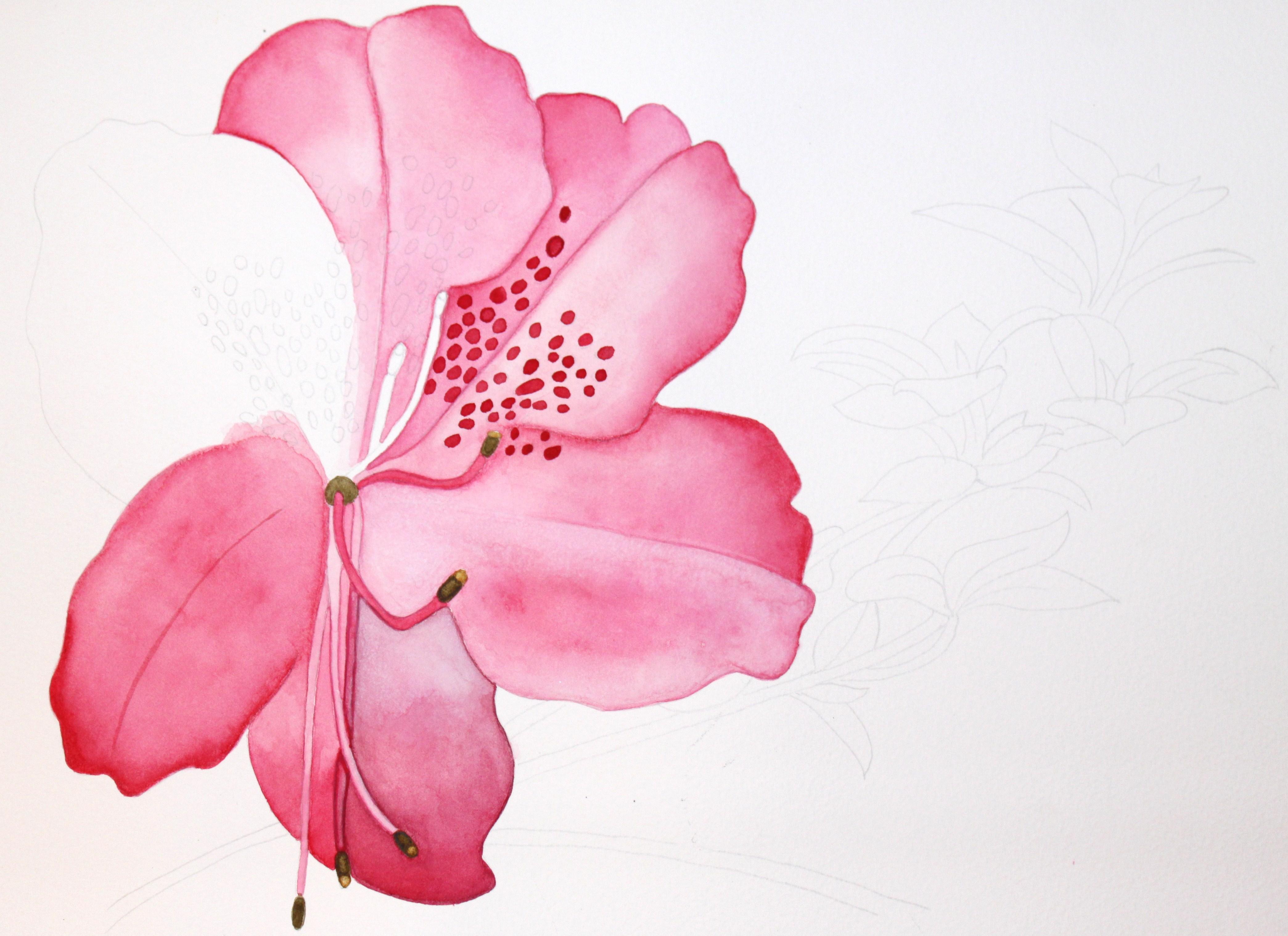 Work In Progress Pink Hibiscus Afternoon Artist