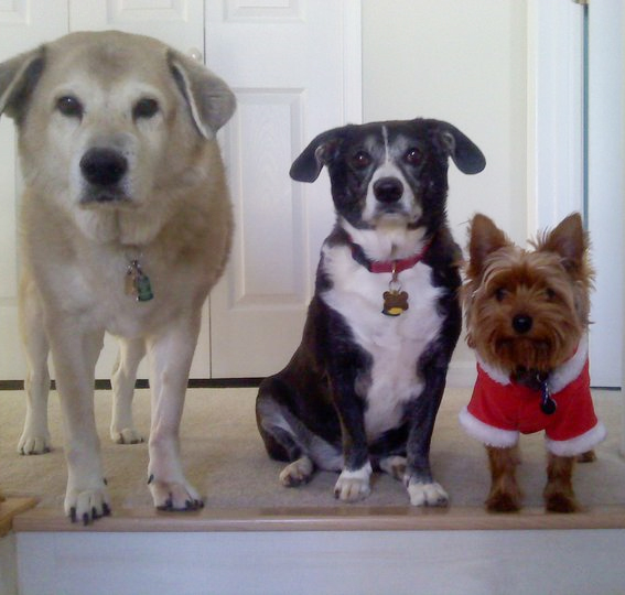 Dogs Holiday Photo