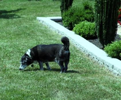 canine garden buddy