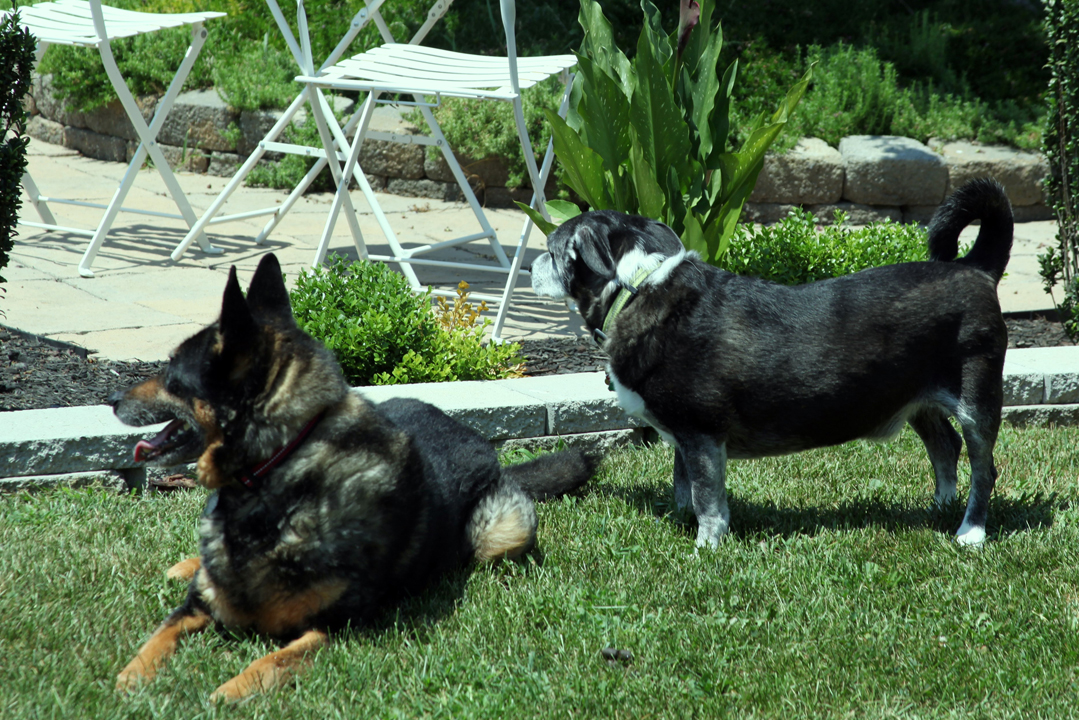 canine gardening assistants