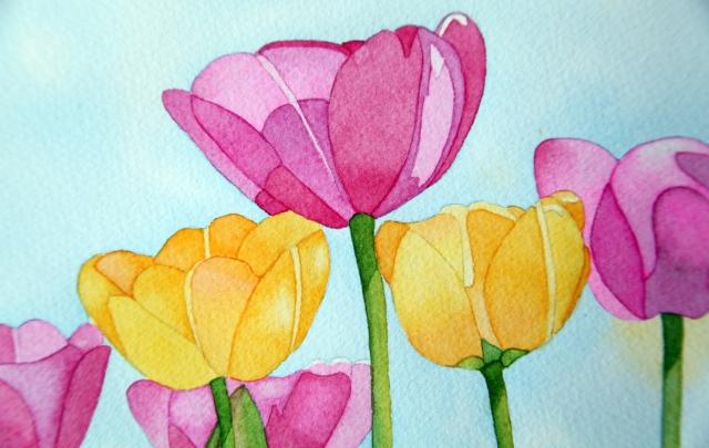 Tulip field close up