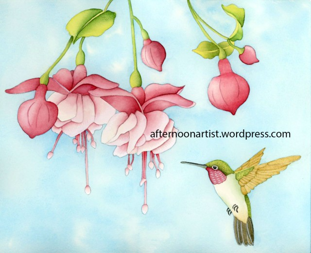 Fucshia and hummingbird in watercolor