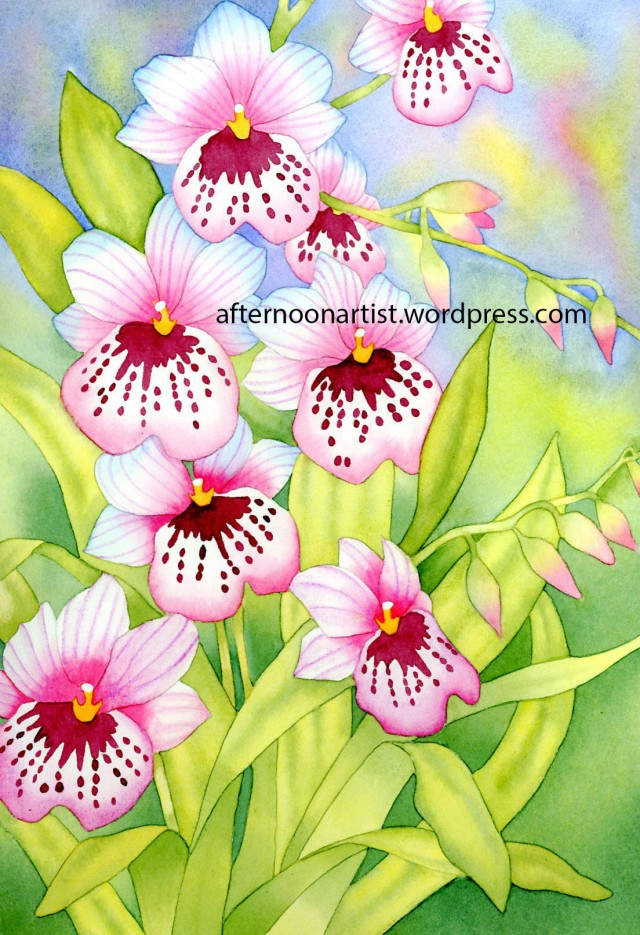 Pink Miltonia Orchids in Watercolor