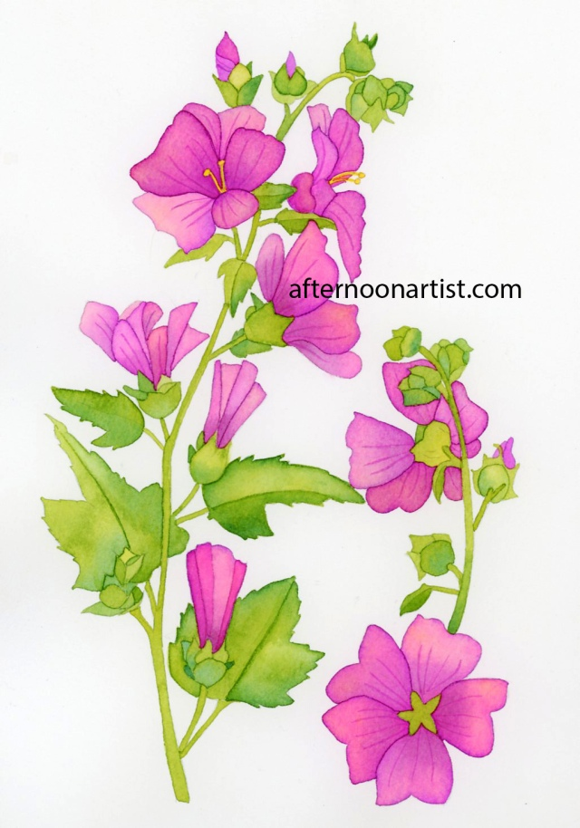 Silver cup mallow in watercolor